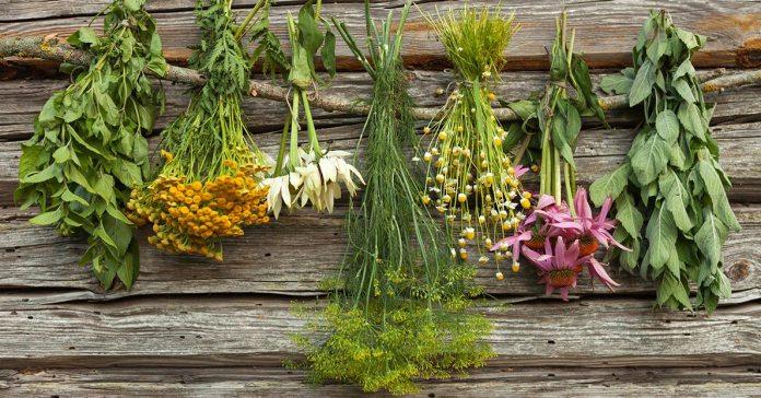 : Health benefits of common herbs