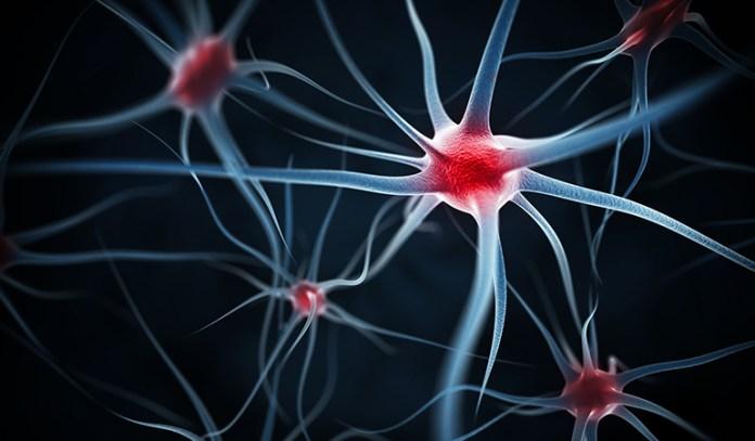 Nutrients in mustard overlook nerve transmission