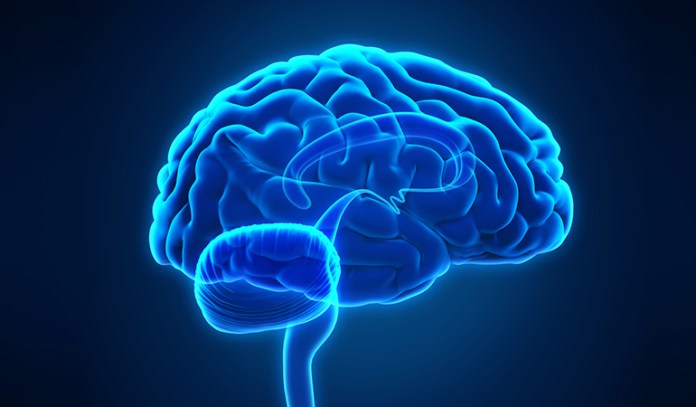 The antioxidant properties of miracle fruits enhance brain function