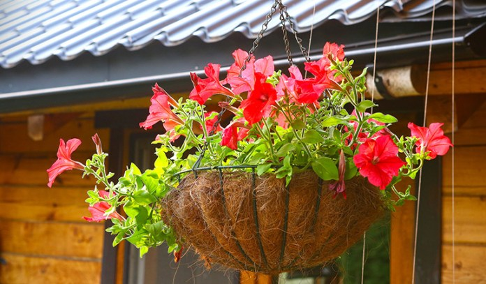 Hanging up the pots filled with colorful flowering plants add beauty to your homes