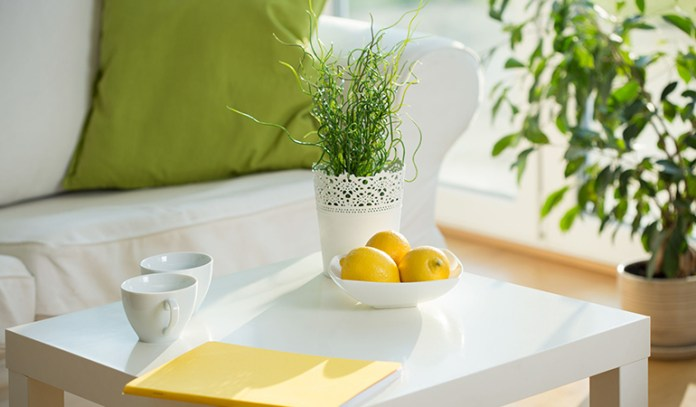 Houseplants can be used to clean the air