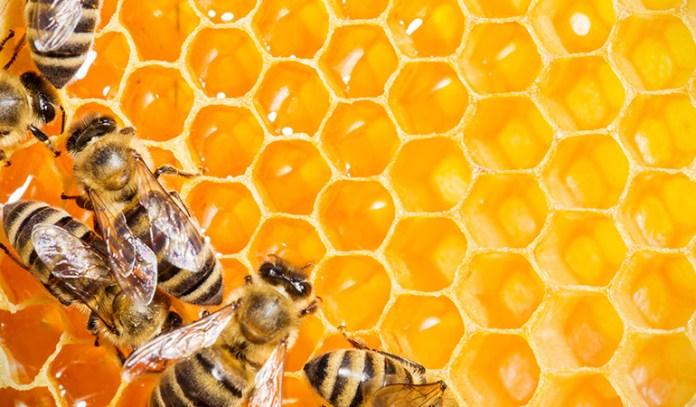 honeybees use nectar to make honey