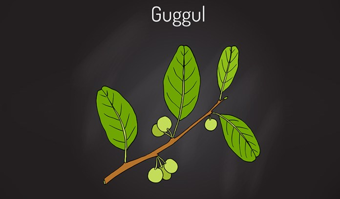Medicinal desert plants like guggul have been found to help serious ailments like cholesterol