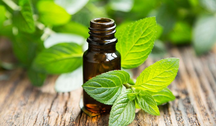 antibacterial action of peppermint oil
