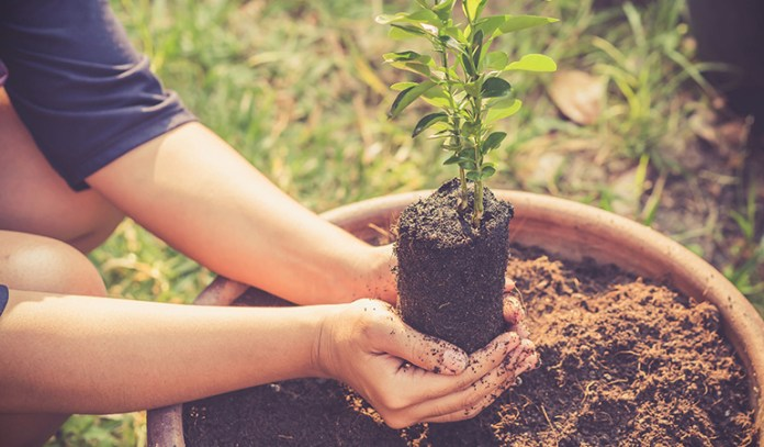 The right kind of soil is essential based on the plants you plan to keep