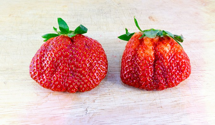(Due to colder weather conditions, strawberries might fuse into one another.)