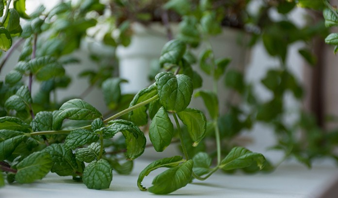 Indoor plants can purify and filter the air around you as well lower your stress levels.