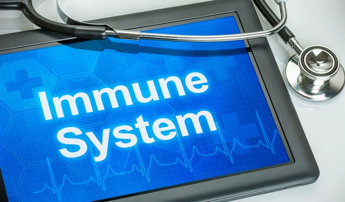 Fermented foods boost the immune system