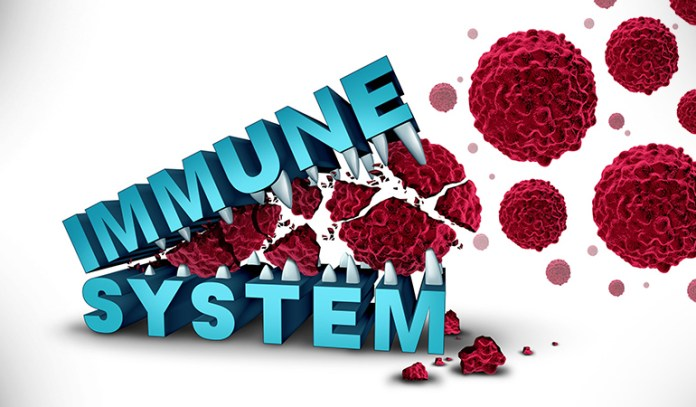 Your gut affects immunity.