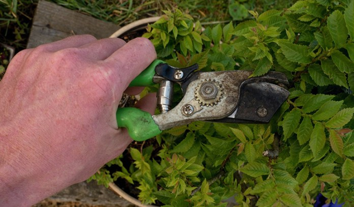 Continuous cleaning, pruning, and gardening may increase the risk for trigger finger