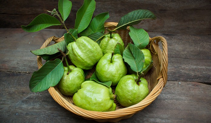 Guava leaves contain antioxidants that can promote hair growth.