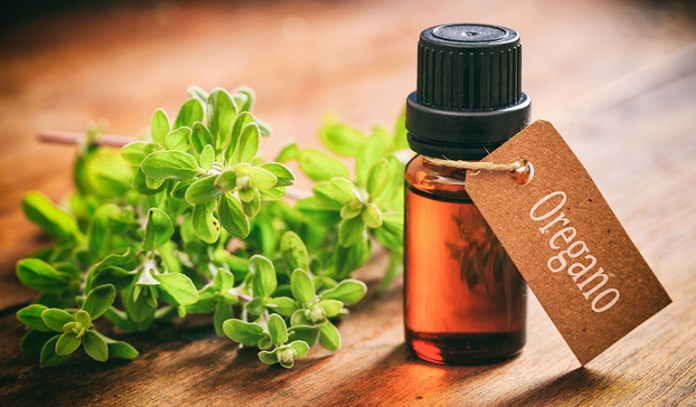 Oregano extract ointment can decrease bacterial contamination and infection on post-surgical wounds