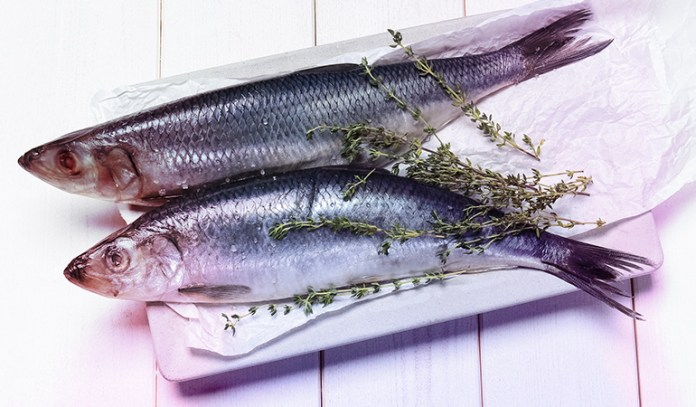 A serving of Atlantic herring has 0.94 gm of DHA and 0.77 gm of EPA