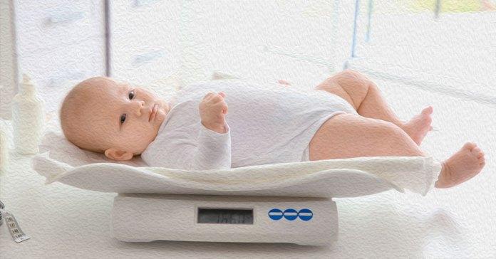 Newborns weigh around 5.5–8.8 pounds.