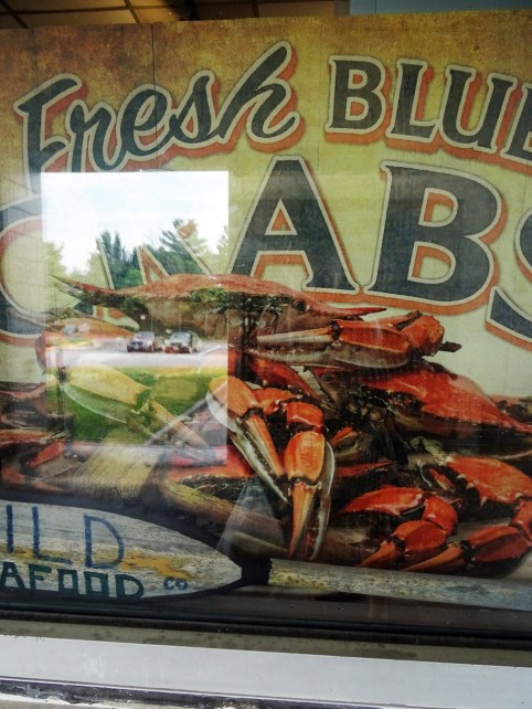 Les crabes bleus du Maryland.