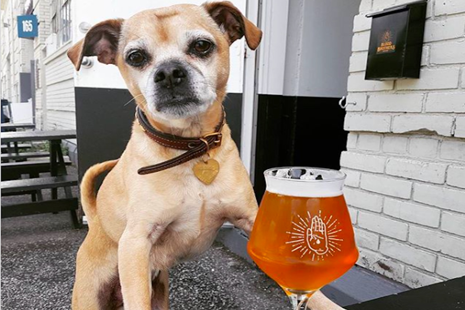 12 of our favourite dog friendly patios