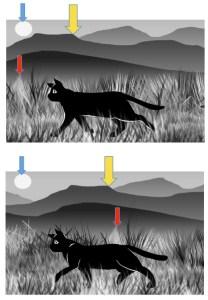 Le phénomène de parallaxe : si nous nous déplaçons latéralement par rapport à plusieurs objets, les objets les plus proches de nous semblent se décaler de façon plus importante que les objets les plus éloignés. Pensez par exemple aux éléments d'un paysage observé depuis la fenêtre d'une voiture. Ce principe est utilisé dans les dessins animés pour donner l'illusion d'une profondeur. Les différents plans ne se déplacent pas à la même vitesse. (DR)