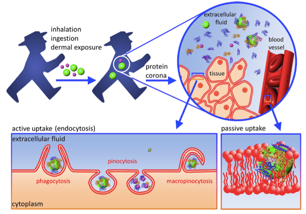 http://jnanobiotechnology.biomedcentral.com/articles/10.1186/1477-3155-12-5