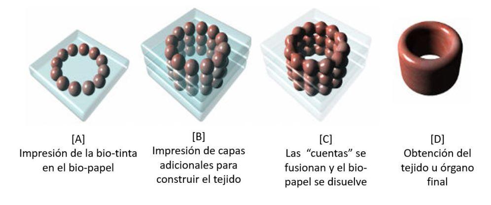Modificado de http://www.explainingthefuture.com/bioprinting.html
