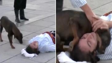 Ator se deita no chão e cachorro de rua