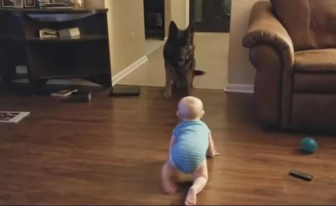 Cachorro e bebê se revezam perseguição