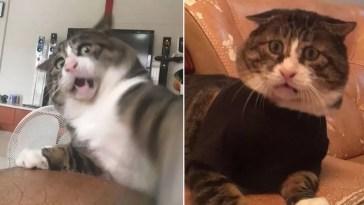 Gato com o rosto mais expressivo