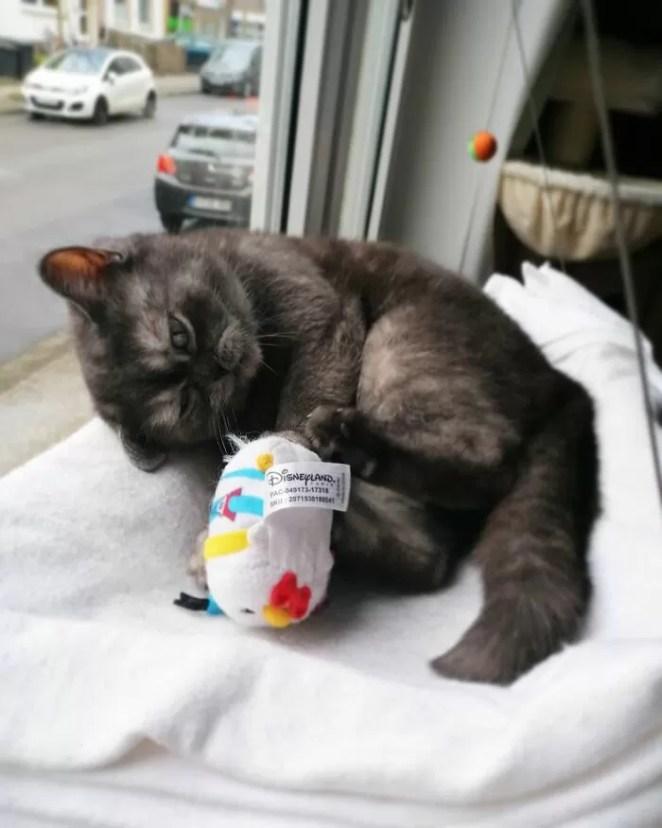 Mulher se apaixona por gata considerada feia abrigo