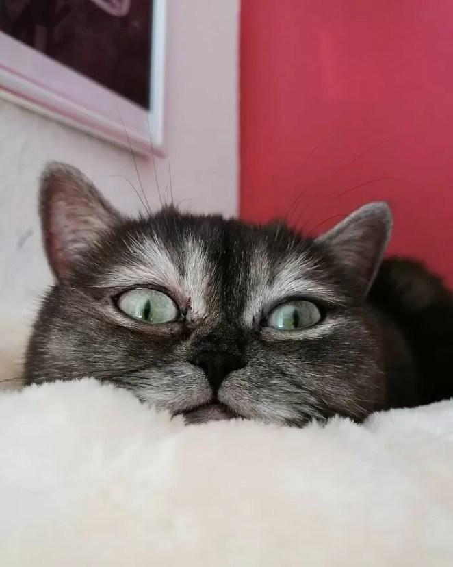 gatinha chamada de feia