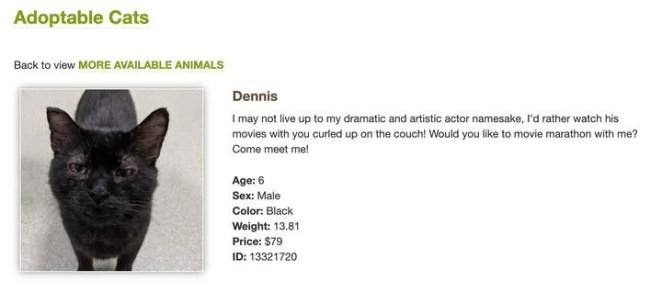 gato Dennis Quaid
