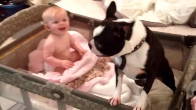 Cachorrinho se recusa a deixar bebê