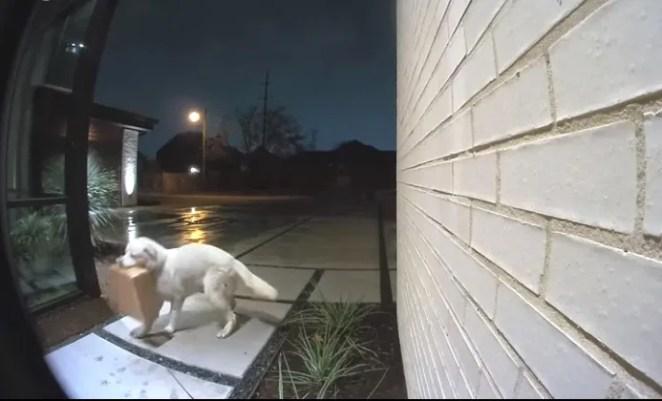 Câmera flagrou um cachorro roubando encomenda
