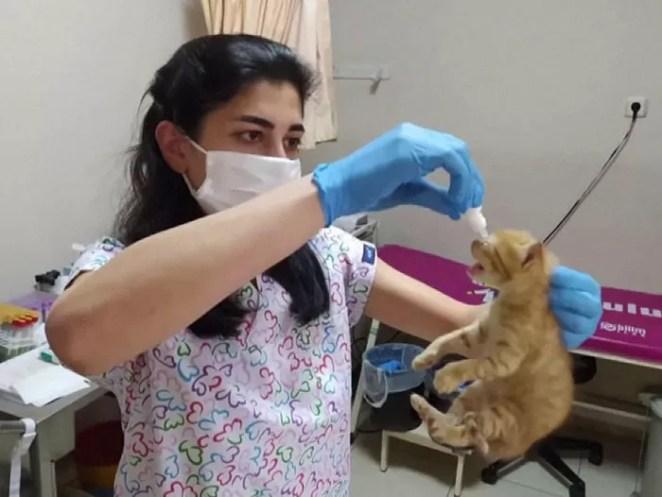 filhotes ao hospital ajuda