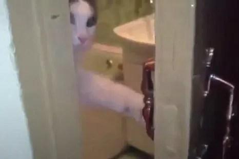 Gatinho educado fecha a porta