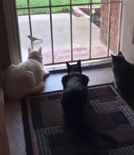 Gatos observavam um pássaro susto