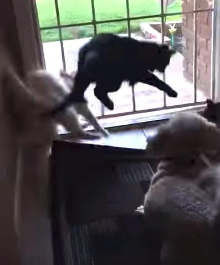 Gatos observavam um pássaro