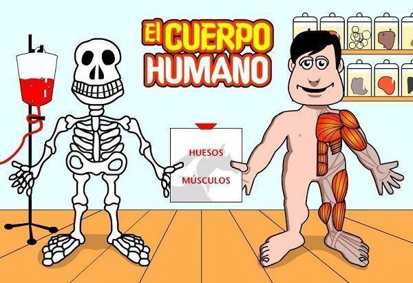 curiosidades sobre el cuerpo humano