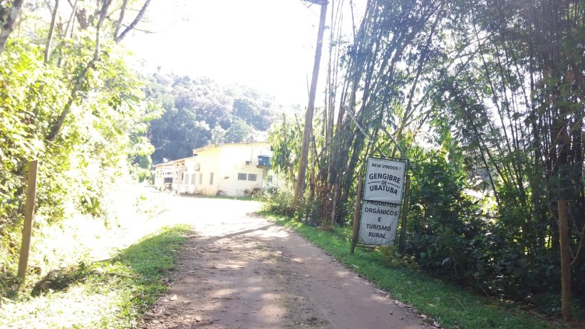 Gengibre de Ubatuba