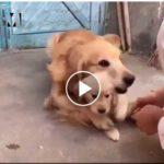 Tierno Vídeo: Perro protege a su cachorro.