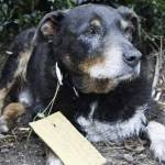 Un perro perdido regresa a casa 10 años después