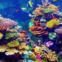La música para restaurar corales