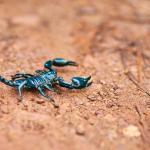 El escorpión más antiguo sobre la Tierra