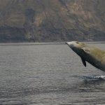 Los silenciosos cetáceos zífidos