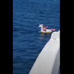 Ferry rescata a una niña de 4 años a la deriva en un flotador de unicornio