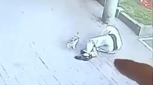 Gato que cayó de edificio noqueó a anciano y lo mandó 23 días al hospital