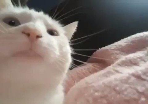 Un gato mueve su cabeza al ritmo de la música