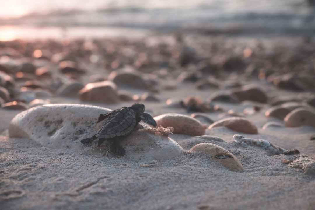 turtle crawling on stony coast