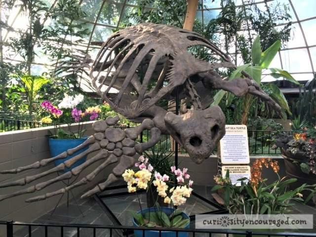Travel with Kids to South Dakota, Visit Reptile Gardens, Family Travel, South Dakota