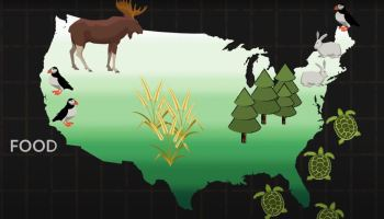 Impacts of climate change on forests.