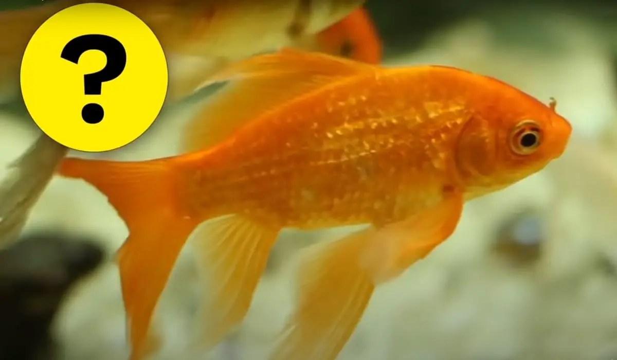 Do Fish Sleep? | Sleeping Habits of Animals