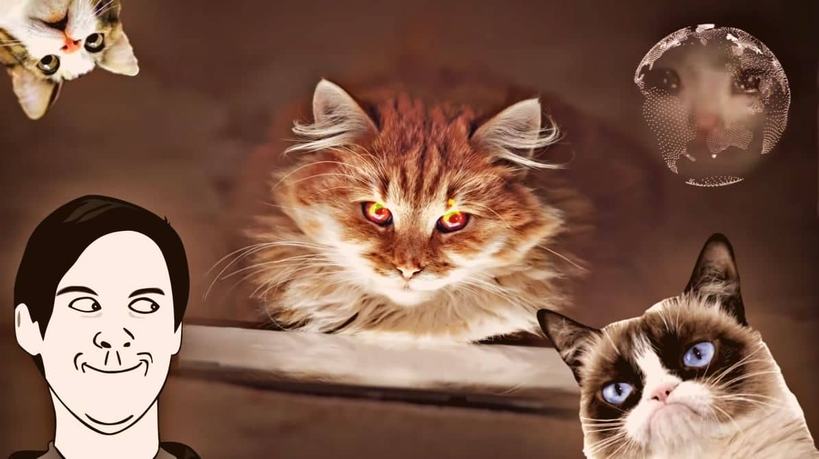 Strange cat behaviors